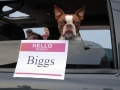 biggs the dog